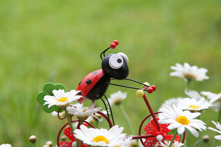 Lady Bug Bike